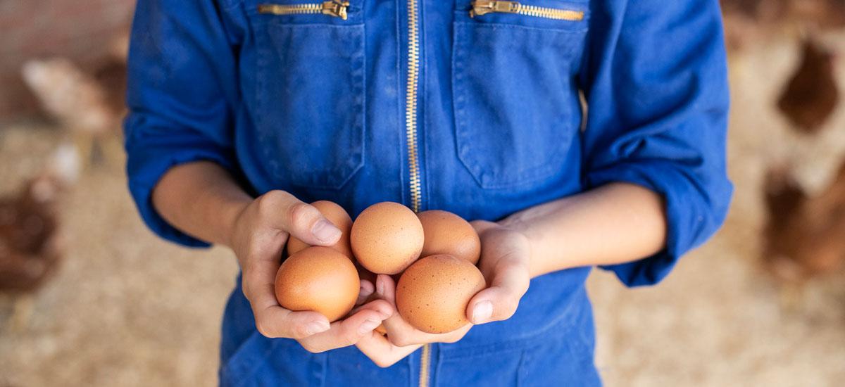 Bij AH weet je vanaf nu alles over je ei