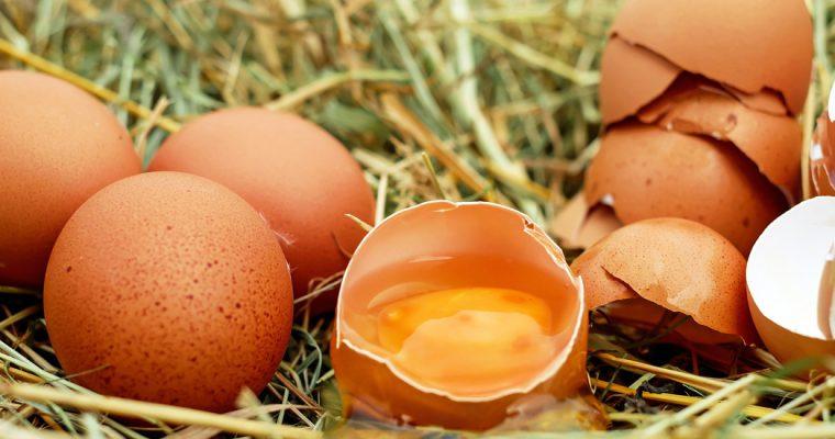 Opnieuw fipronil in eieren Tilligte