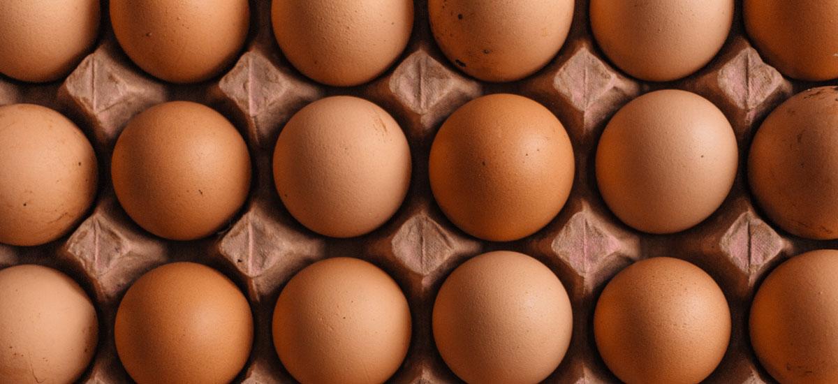 'Genetisch aangepaste kippen leggen medicinale eieren tegen kanker'