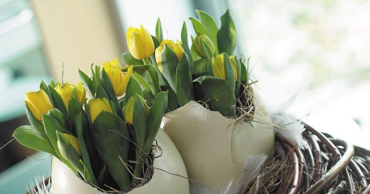 7 populaire paasbloemen en hun betekenis
