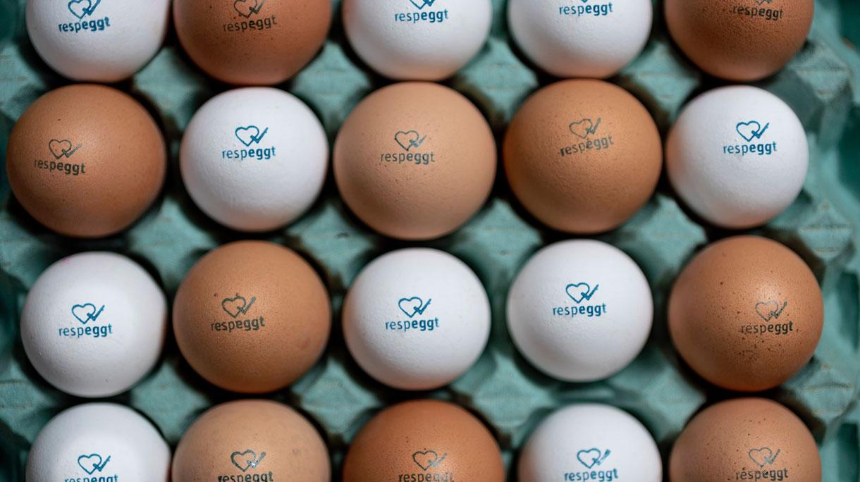 Jumbo gaat als eerste Nederlandse supermarkt Respeggt eieren (eieren zonder eendagshaantjes) verkopen