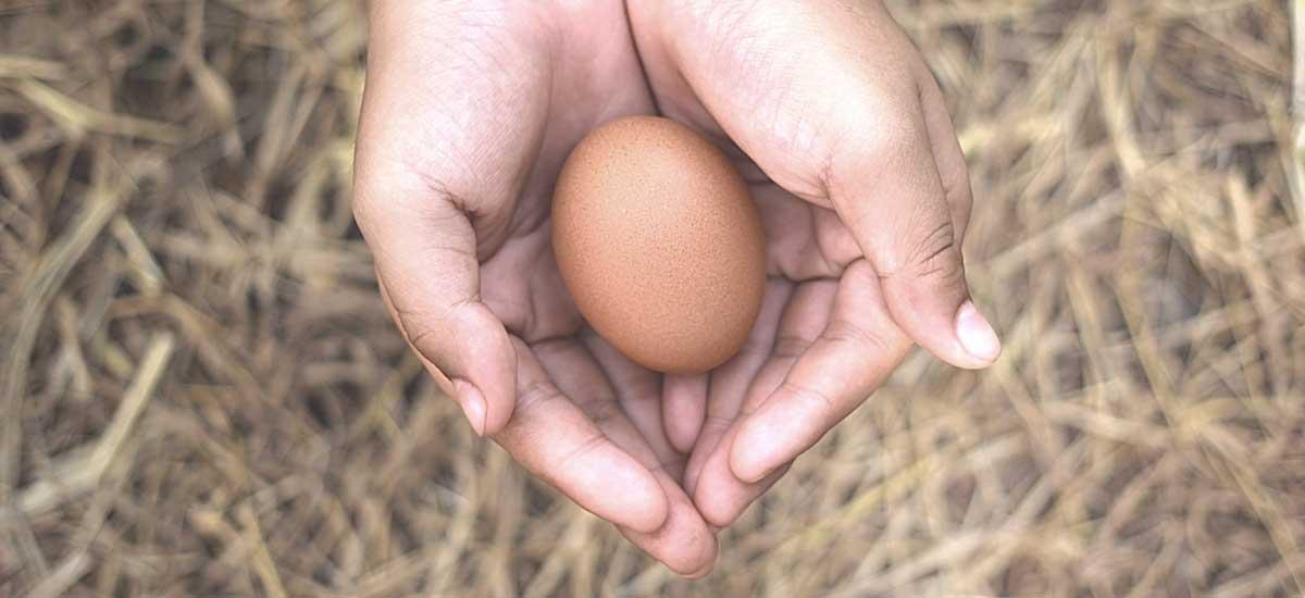 Hoe worden eieren eigenlijk gemaakt?