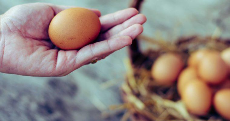Consument wil 'seksen in het ei' als alternatief voor doden eendagshaantjes